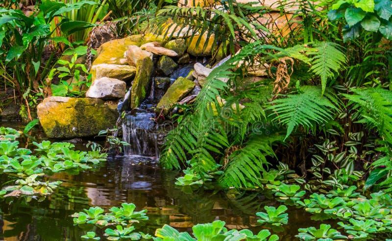 有热带植物和瀑布的,异乎寻常的庭院,自然背景美丽的水池 库存照片