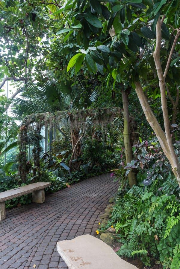 有热带植物的温室 免版税库存照片