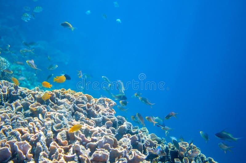 有热带鱼的珊瑚礁墙壁 温暖与净水和阳光的蓝色海视图 免版税图库摄影