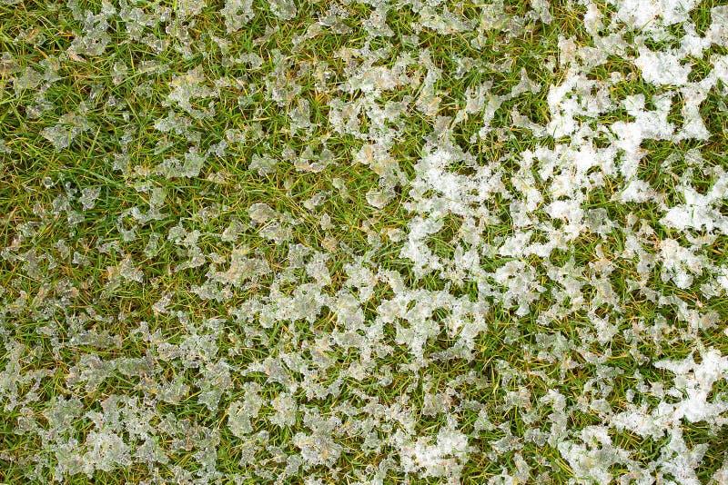 有熔化的雪纹理的中间高的草坪 公园草坪纹理 顶视图,顶上的射击 Grassplot表面背景 库存照片