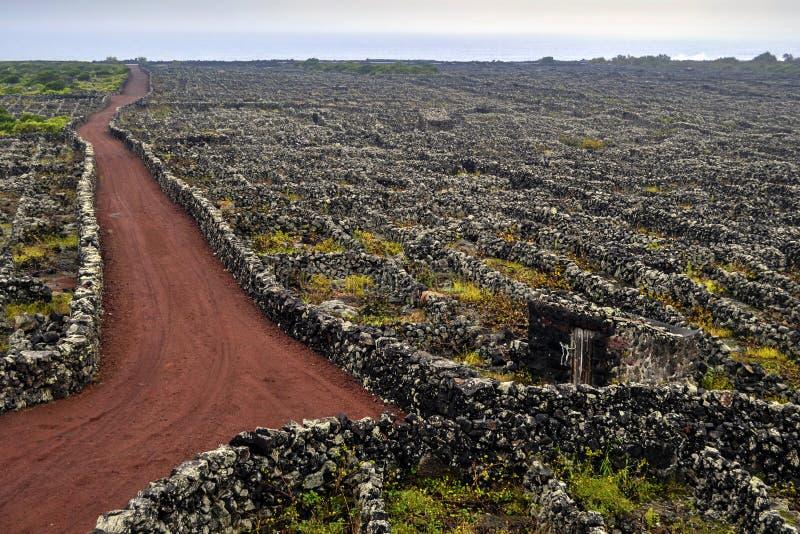 有熔岩` s墙壁的葡萄园在Pico海岛上在联合国科教文组织被保护的名单上列出了 免版税库存图片