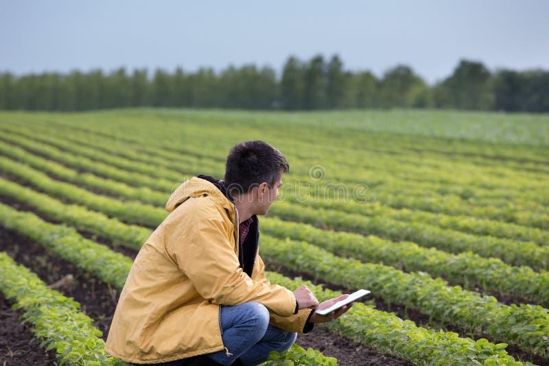 有片剂的农夫在大豆领域在春天 库存图片