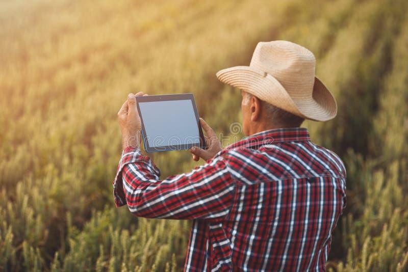 有片剂的农夫在麦田 E 库存图片