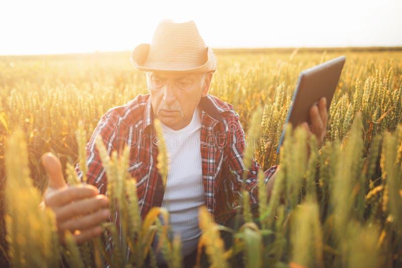 有片剂的农夫在麦田 E 库存照片