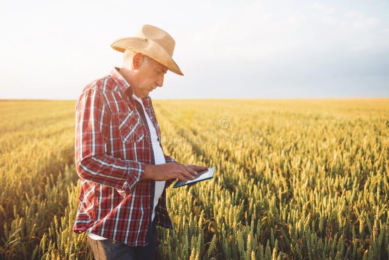 有片剂的农夫在麦田 E 免版税库存照片