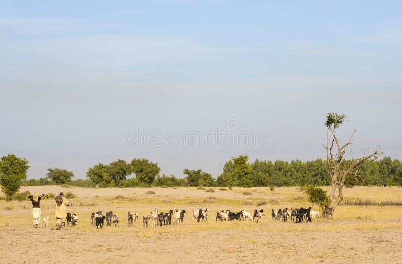 有牧群的两位牧羊人 免版税图库摄影