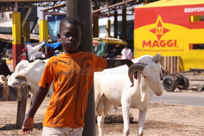 有牺牲绵羊的塞内加尔男孩 库存图片