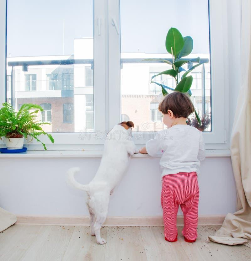 有狗和植物的小孩男孩在窗口附近 免版税库存图片