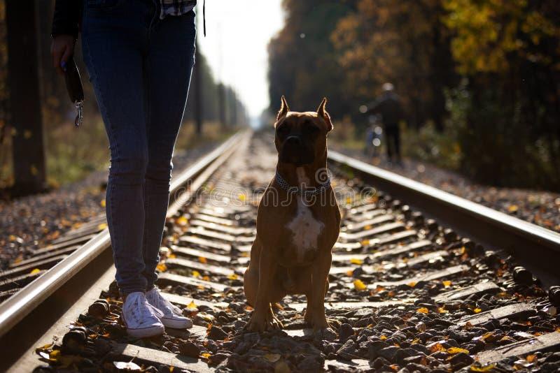 有狗步行的可爱的妇女在铁路在公园 免版税库存照片
