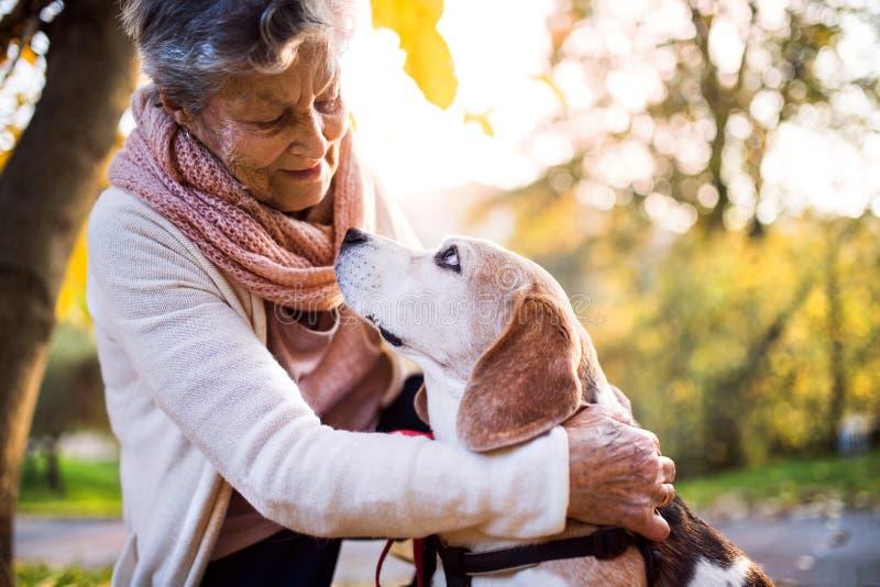 有狗的一名年长妇女在秋天自然 免版税库存照片