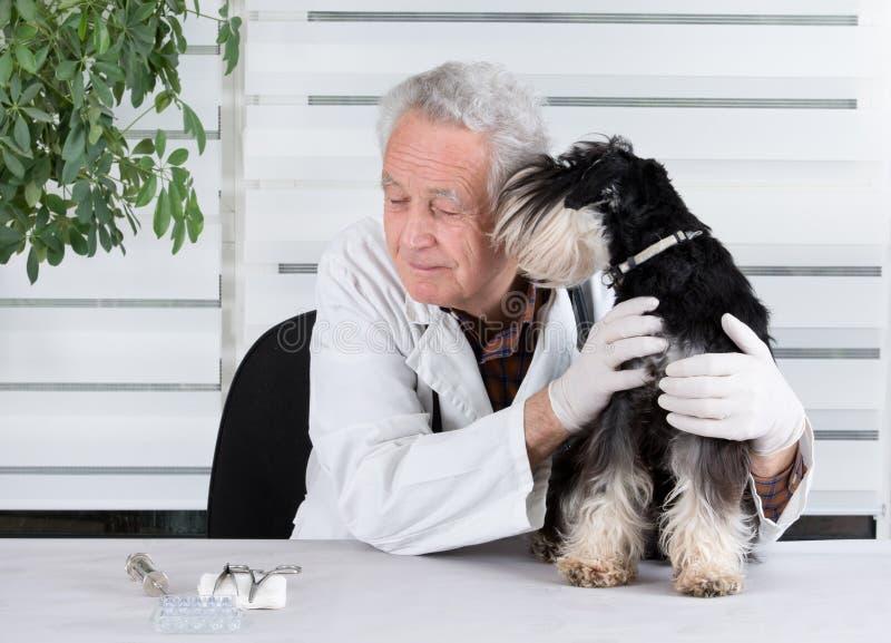 有狗的兽医 图库摄影