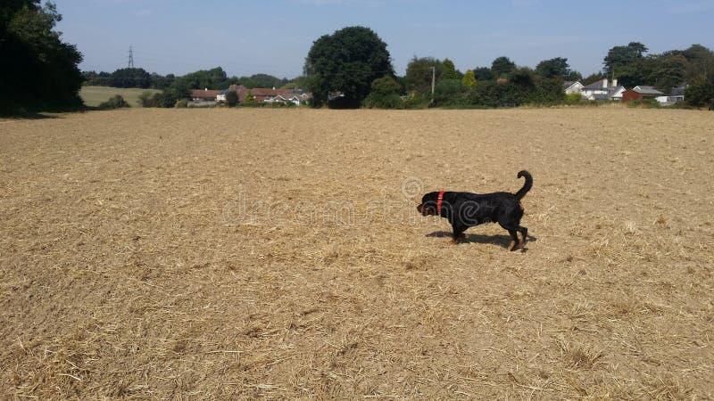 有狗的农场 库存照片