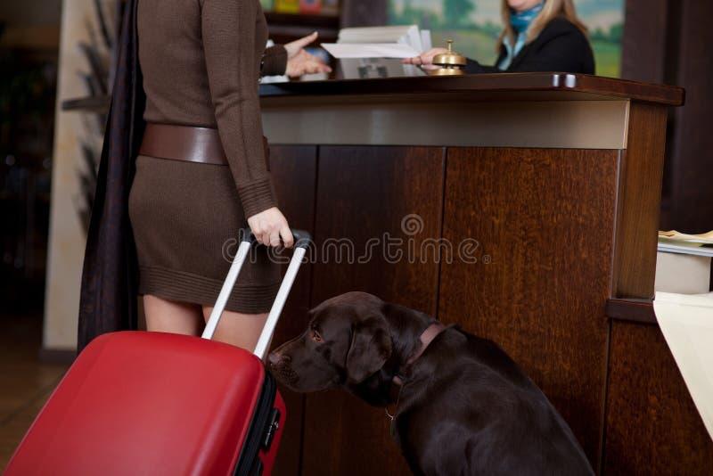 有狗的女性客人在旅馆招待会 免版税库存照片