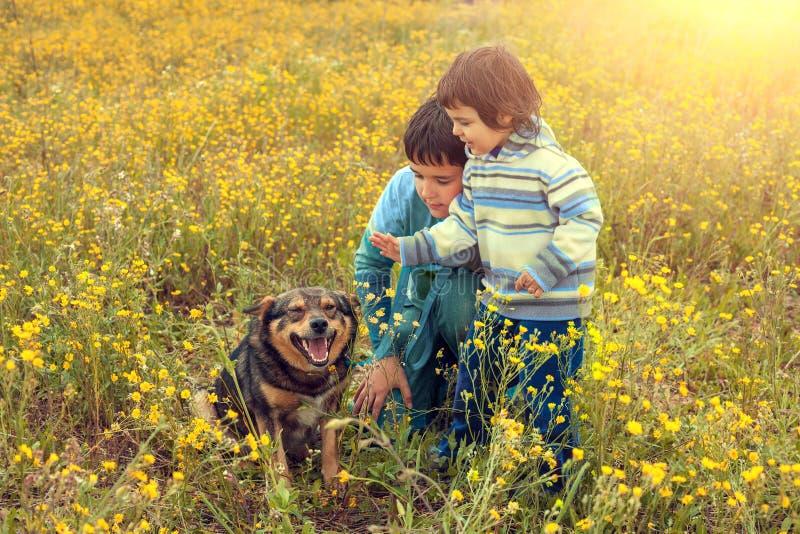 有狗的孩子在草甸 库存图片