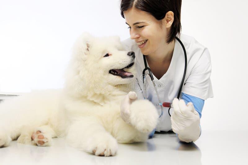 有狗的微笑的兽医在狩医诊所 免版税库存照片