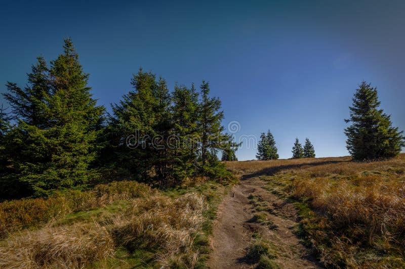 有狭窄的道路的有深蓝天空的草甸和树丛 库存照片