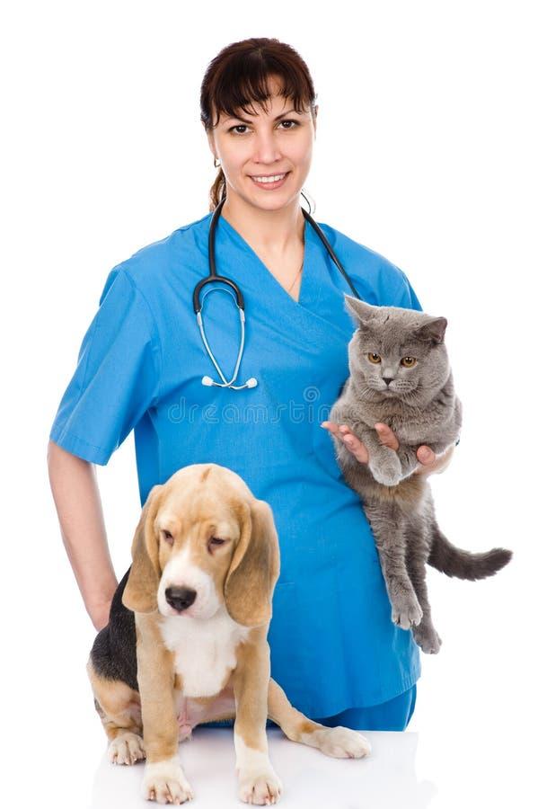 有猫和狗的兽医 背景查出的白色 库存照片