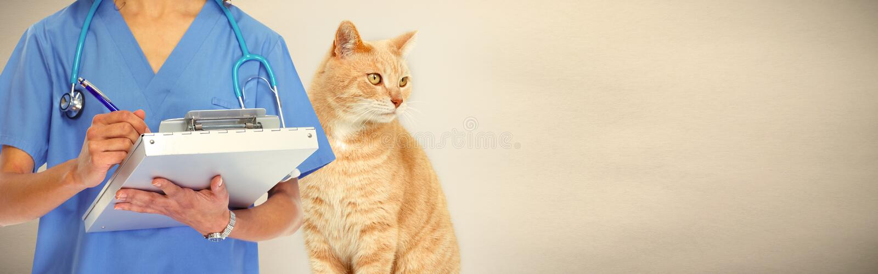 有猫的兽医医生在兽医诊所 图库摄影
