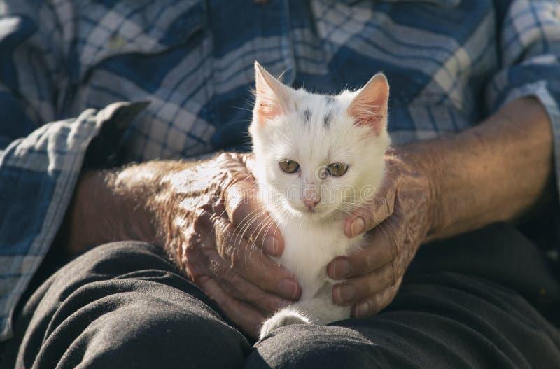 有猫的年长人 库存图片