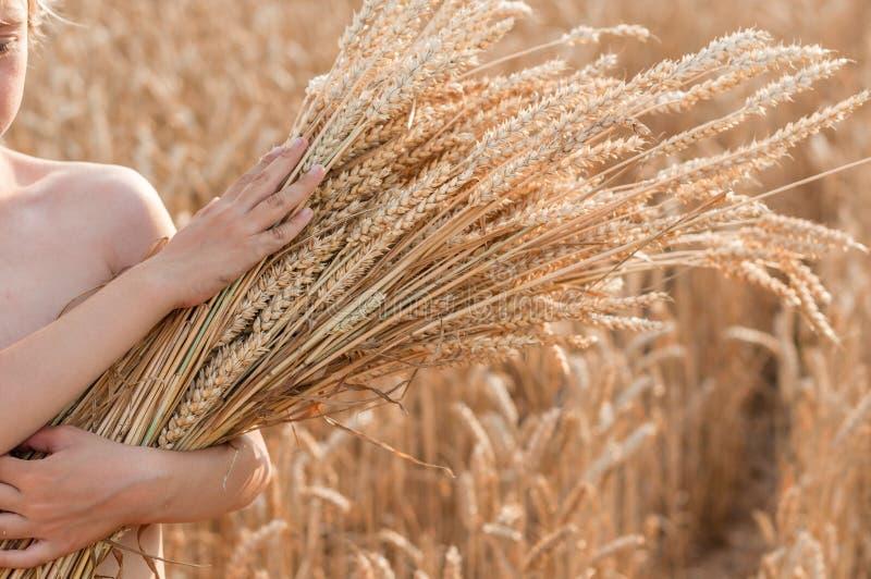 有玉米穗的男孩在谷物的领域的 免版税库存照片