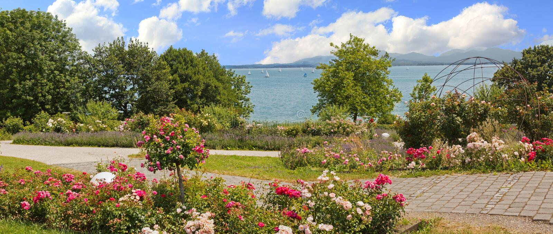 有玫瑰和淡紫色的,山田园诗湖边散步竞争