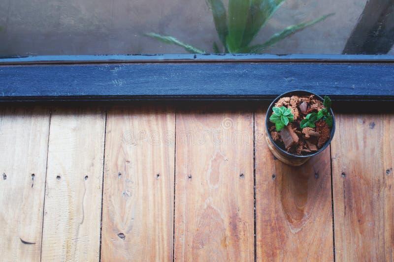 有玻璃窗的植物罐 免版税图库摄影
