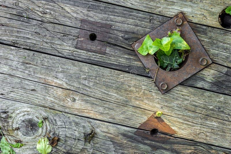 有生锈的金属零件的老木板和常春藤来详尽孔 图库摄影