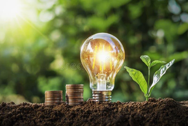 有生长在与阳光的土壤的电灯泡和金钱堆的植物 概念挽救 库存照片