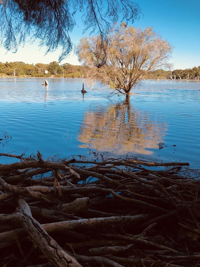 有生长在它的树的湖 免版税库存图片