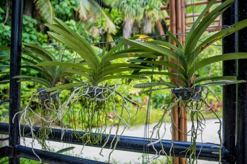 有生长植物的罐 免版税库存图片