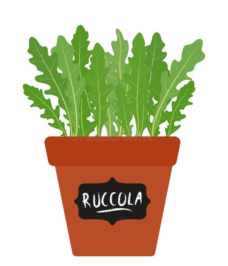有生长芝麻菜ruccola的,火箭沙拉叶子罐被隔绝在白色 向量手拉的例证 皇族释放例证