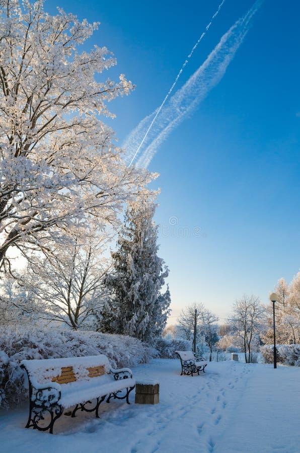 有用树冰盖的树的美丽的城市公园 图库摄影