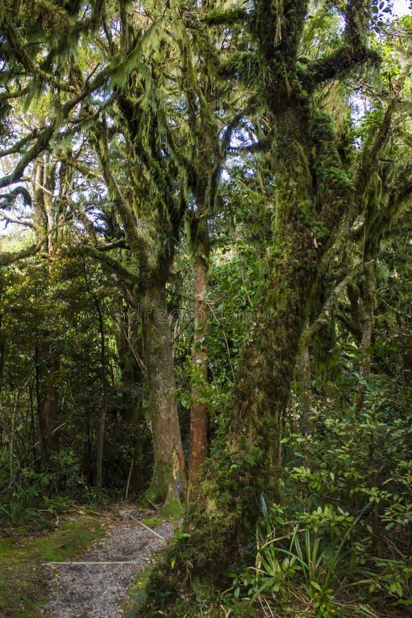 有用青苔盖的树的不可思议的森林 免版税库存照片