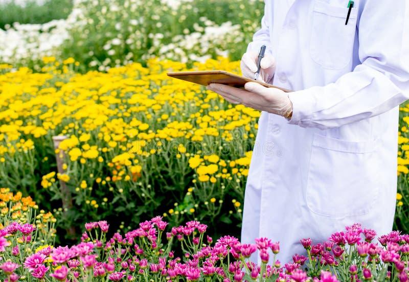有白色实验室褂子用途片剂的科学家对分析和记录多色花数据在庭院里试验在期间 库存图片