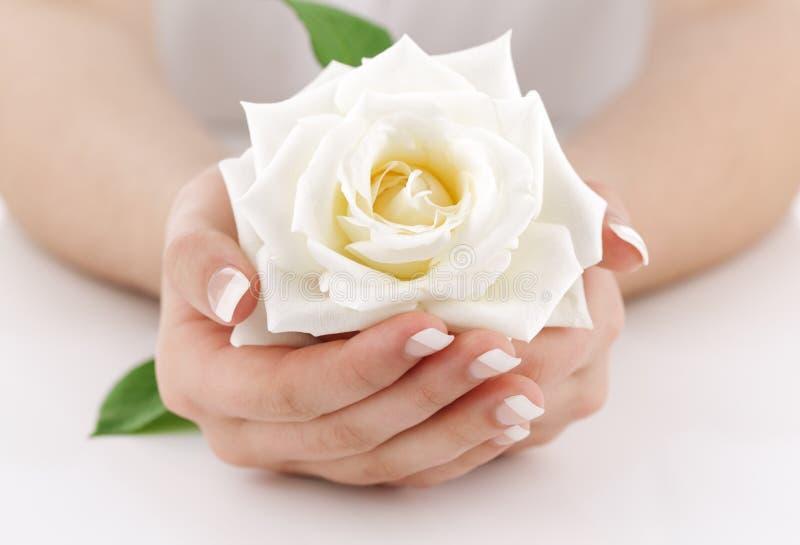 有白色玫瑰的妇女的手 免版税图库摄影