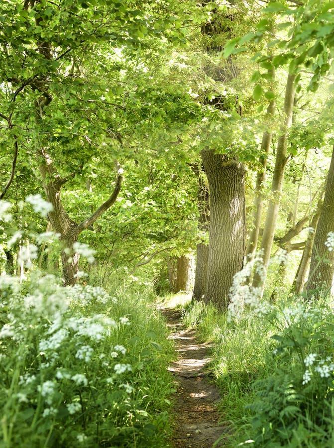 有白花的田园诗森林道路 图库摄影