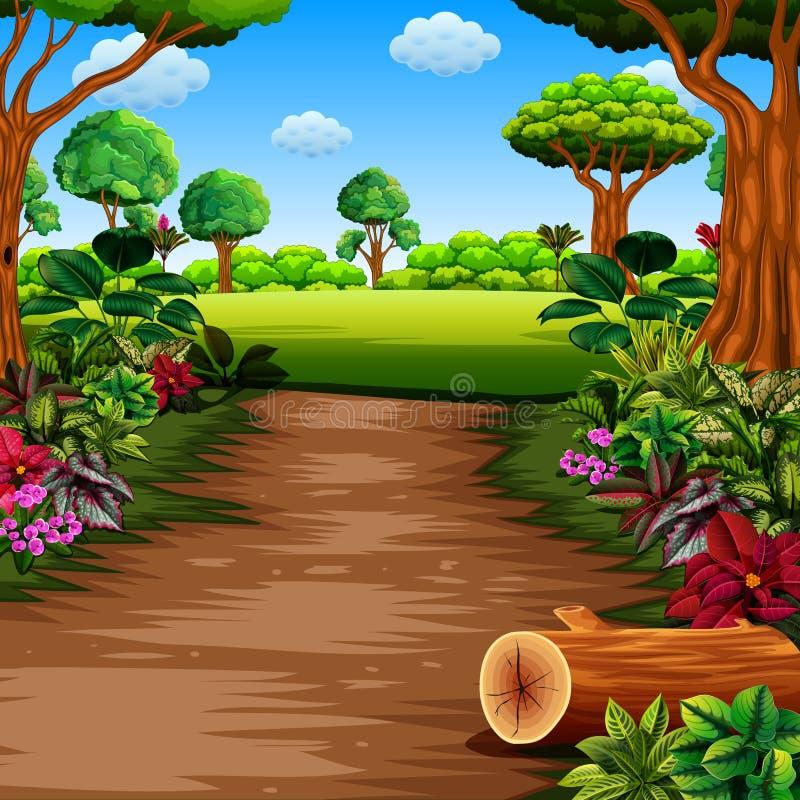 有的小径和美丽的植物的森林双方 向量例证