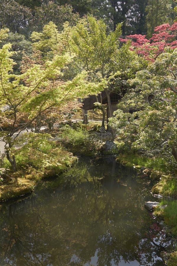 有的日本庭院由后面照的树和一条平静的河前景的 库存照片