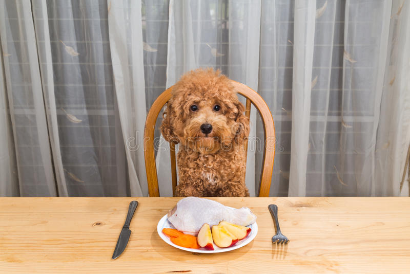 有的狗的概念在桌上的可口生肉膳食 免版税库存图片