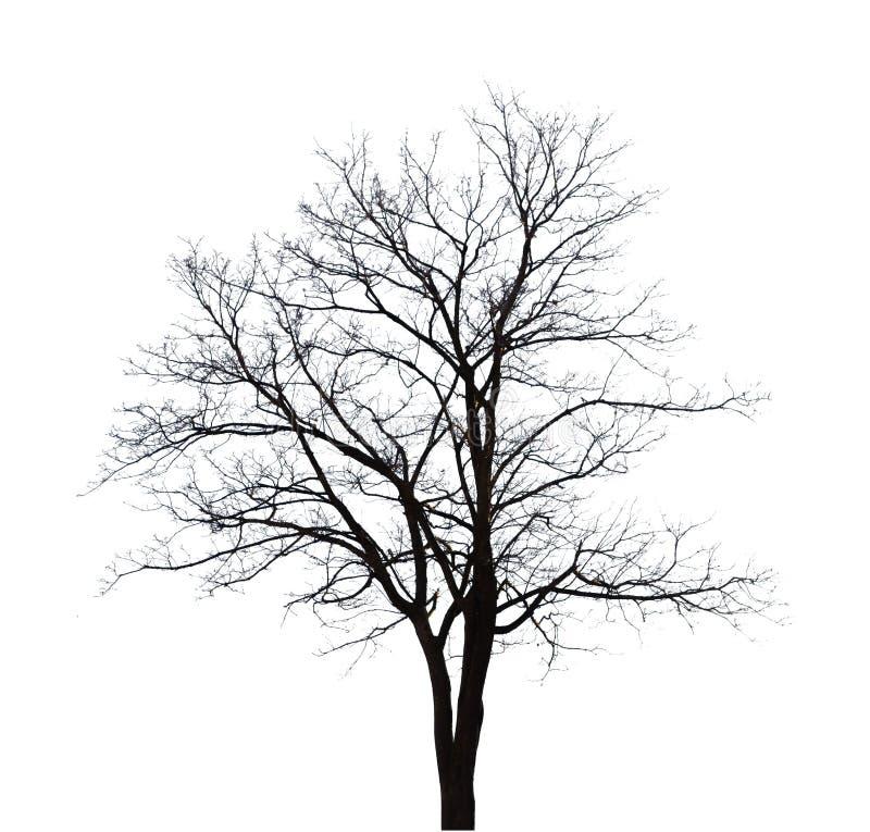 仅有的结构树 皇族释放例证
