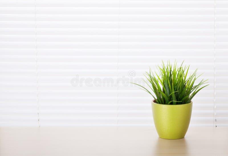 有盆的植物的办公室工作场所 库存图片