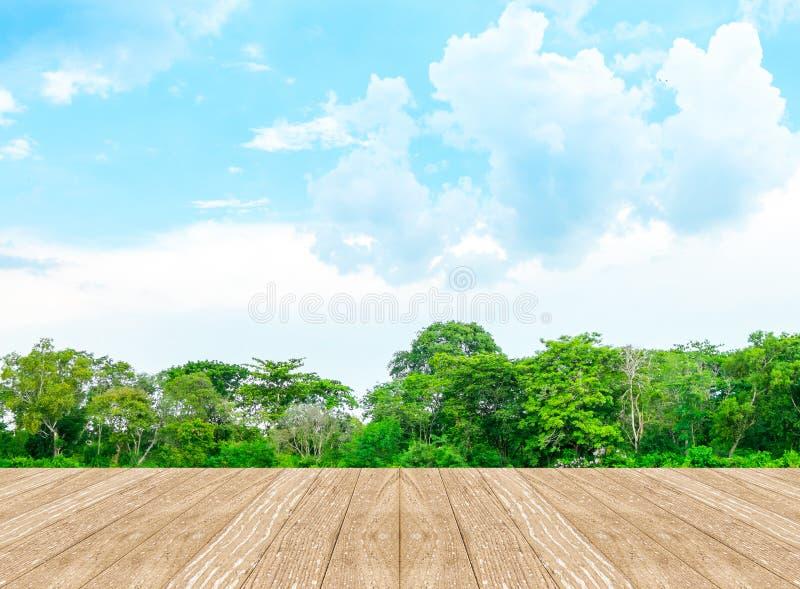 有盐水湖的空的透视室森林的和蓝天和wo 库存照片