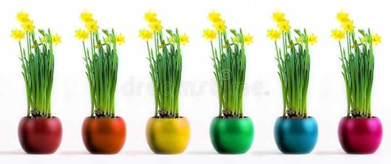 有盛大的黄色黄水仙的六个色的罐 库存图片