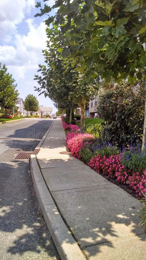 有相当花和植物的边路 免版税图库摄影