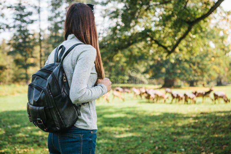 有看野生驯鹿的背包的年轻美丽的旅行女孩吃草在距离 图库摄影