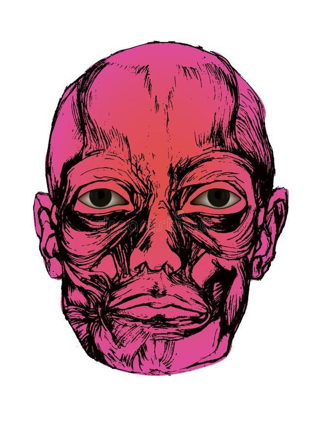 有眼睛的尸体头 向量例证