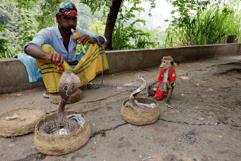 有眼镜蛇的耍蛇者在斯里兰卡 库存照片