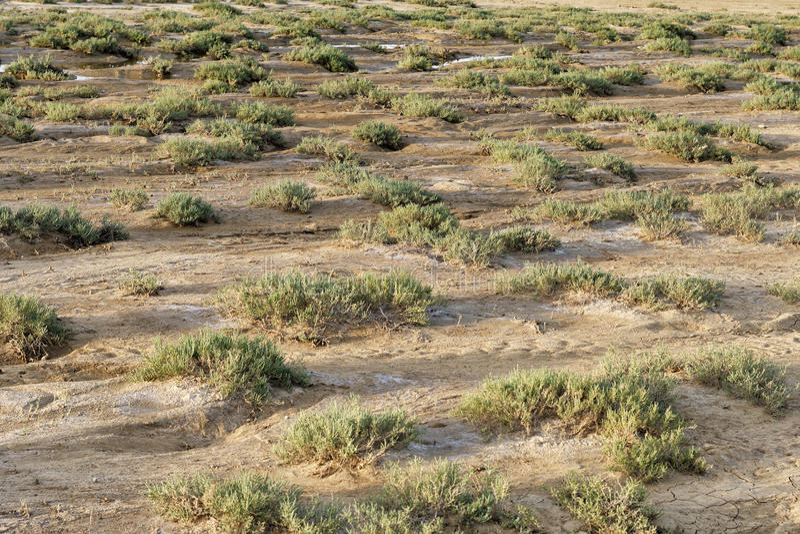 有矮小的植被的干燥地形 库存图片