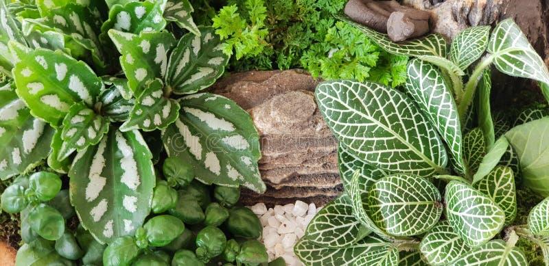 有石头的绿色自然植物庭院在小瀑布罐背景中 树纹理和墙纸概念 环境和 库存照片