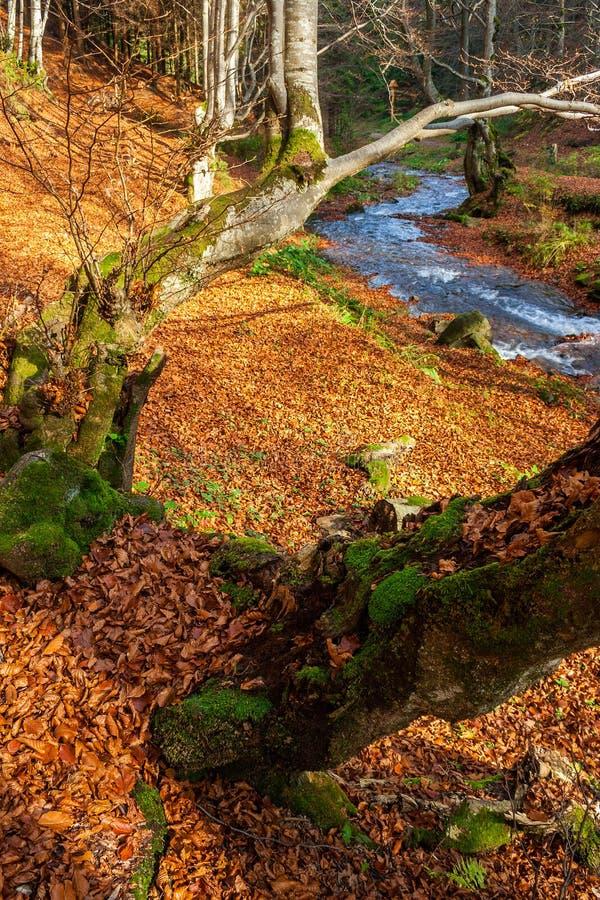 有石头和青苔的森林河 免版税库存图片